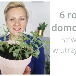 6 łatwych w utrzymaniu roślin domowych