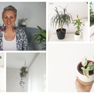 Moja domowa dżungla. Jak zacząć i jakie kwiaty wybrać?